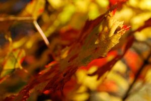 Fall Colors - Red and Yellow by brandychristine1987