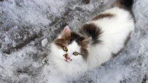 ...winter cat... by Obanamania