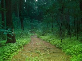 Into the forest by LuckyTraveller