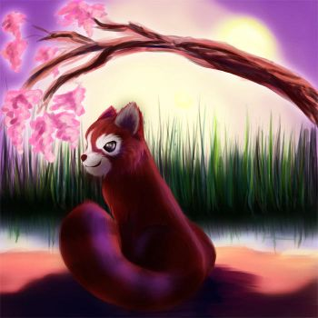 Red Panda by the Lake by BabeMause