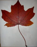 maple leaf by Flrmprtrix