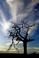 Dumfries Tree Ghost Revisit2 by Coigach