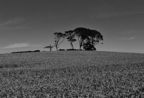 Ballyhay trees 2 Aug 2013 by dhc72