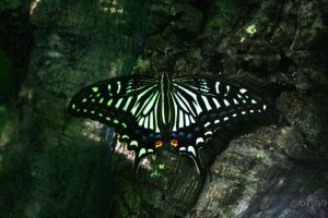 Butterfly 3 by stinq