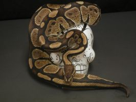 Ball Python 8 by FearBeforeValor