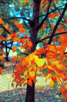 Colors of Fall by Joe-Lynn-Design