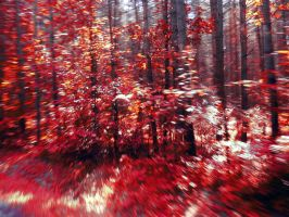 living forest 3 by grajcar