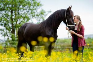 Friesian. by equinelovex