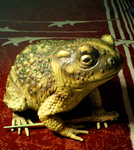 Real life crystal-covered toad by Master-Kankuro