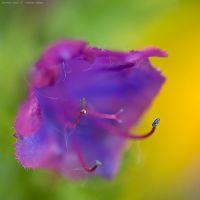 summer colour 2 by emmbbee