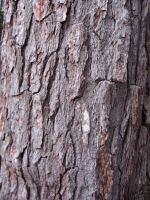 tree bark 3 by kayas-stock