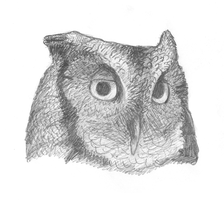 Screech Owl by Shift-ing