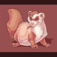 Ferret by AnimalGal19