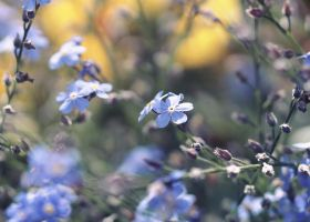 Forget Me Not V by Milasery