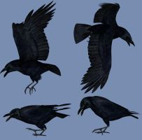 Crows by struckdumb