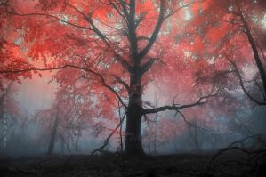 -Archetype- by Janek-Sedlar
