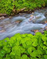 Spring Creek by AndreasResch