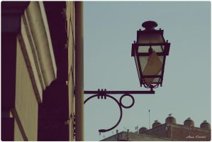 Lamp. by anafilipacouto