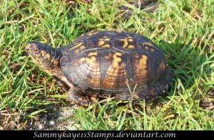 Turtle 1 by Sammykaye1sStamps