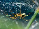 nice spider by MarcZingg