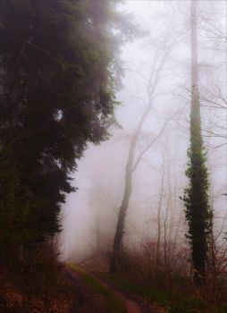 Lost in the Woods VI v3.0 by Aenea-Jones