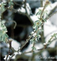 Chilly tones by illiyana