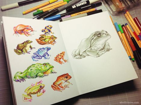 Frogs sketching by alxferreiro