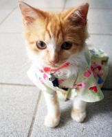 My clothed kitten by Dakkita