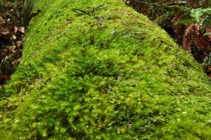 2014-gheerulla-moss-5 by tbg-stock-images