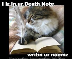 LOLcat by Link179