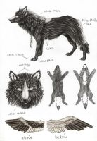 Nero Wolf form Ref-Sheet by SaidyWolf