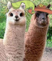 Llamas with hats by Smashcooper