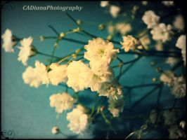 Little Flower 1 by CADianaPhotography