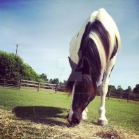:Miss Molly Bell: by HappyLionHorse25