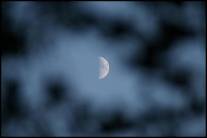 Half moon and leaves - Oct 08 by pearwood
