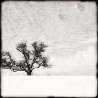 winter: the tree at topsmead by Moon-Willow