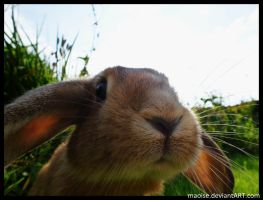 Bunny Snout by Maoise