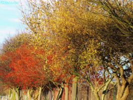 yellow leafs and red berries by IamNasher