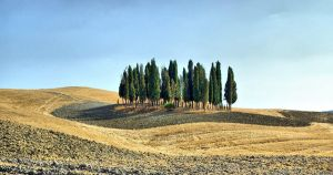 Toscana, pines by Borymir