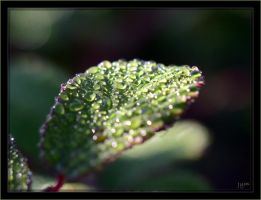 Morning dew by J-Y-M