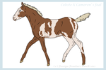 Camoren X Celeste foal on auction - CLOSED by ForeignFrontierRanch