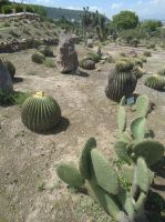 Prickly Town 04 by Rufina-Tomoyo