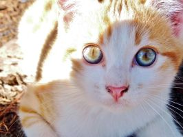 Chaton / Kitten by PhotosCrystalJones