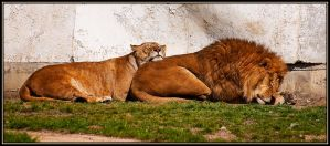 Sleeping lions by ValdesBG