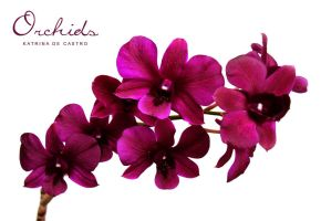 Orchids by deliriousoracle