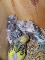 baby pic 2 by parrots4life