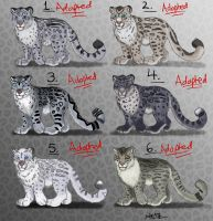 Male Snow Leopard Point Adopts - CLOSED by Nala15