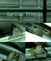 Curious Froggie (another short photo essay) by Austin-Hodge