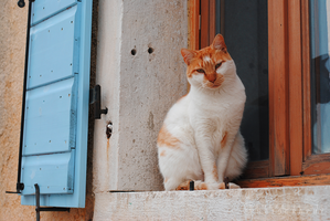 Istrian cat due. by Tamography