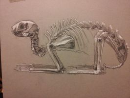 Cat Skeleton by RichardBlumenstein
